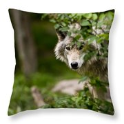 Timber Wolf Pictures 1328 Throw Pillow