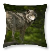 Timber Wolf Pictures 1336 Throw Pillow