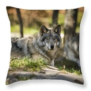 Timber Wolf Pictures 1363 Throw Pillow