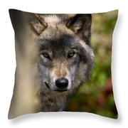 Timber Wolf Pictures 1365 Throw Pillow