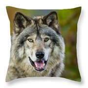 Timber Wolf Pictures 1388 Throw Pillow