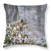 Timber Wolf Pictures 1395 Throw Pillow