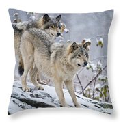 Timber Wolf Pictures 1417 Throw Pillow