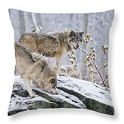 Timber Wolf Pictures 1420 Throw Pillow