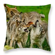 Timber Wolf Pictures 1593 Throw Pillow