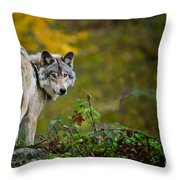 Timber Wolf Pictures 1627 Throw Pillow