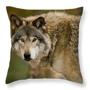 Timber Wolf Pictures 1629 Throw Pillow