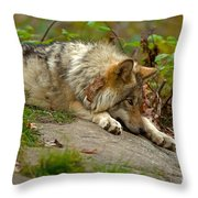 Timber Wolf Pictures 1646 Throw Pillow