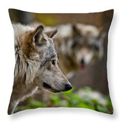 Timber Wolf Pictures 1693 Throw Pillow