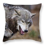 Timber Wolf Pictures 173 Throw Pillow