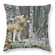 Timber Wolf Pictures 185 Throw Pillow