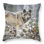 Timber Wolf Pictures 187 Throw Pillow