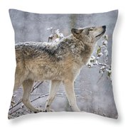 Timber Wolf Pictures 188 Throw Pillow