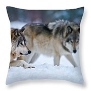 Timber Wolf Pictures 190 Throw Pillow