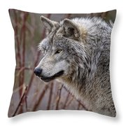 Timber Wolf Pictures 197 Throw Pillow