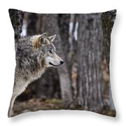 Timber Wolf Pictures 203 Throw Pillow