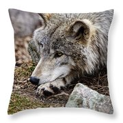 Timber Wolf Pictures 205 Throw Pillow
