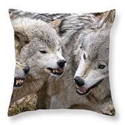 Timber Wolf Pictures 213 Throw Pillow