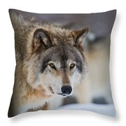 Timber Wolf Pictures 259 Throw Pillow