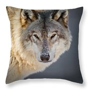 Timber Wolf Pictures 260 Throw Pillow