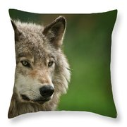 Timber Wolf Pictures 261 Throw Pillow