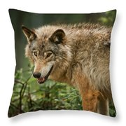 Timber Wolf Pictures 262 Throw Pillow