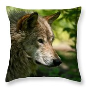 Timber Wolf Pictures 263 Throw Pillow