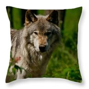 Timber Wolf Pictures 266 Throw Pillow