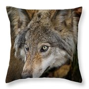 Timber Wolf Pictures 270 Throw Pillow