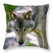 Timber Wolf Pictures 294 Throw Pillow