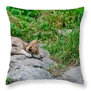 Timber Wolf Pictures 329 Throw Pillow