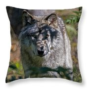 Timber Wolf Pictures 405 Throw Pillow