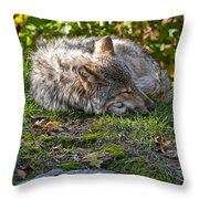 Timber Wolf Pictures 42 Throw Pillow
