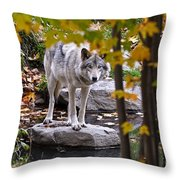 Timber Wolf Pictures 444 Throw Pillow