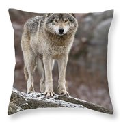 Timber Wolf Pictures 495 Throw Pillow