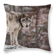 Timber Wolf Pictures 498 Throw Pillow
