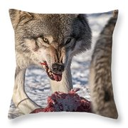 Timber Wolf Pictures 556 Throw Pillow