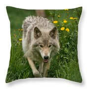 Timber Wolf Pictures 59 Throw Pillow