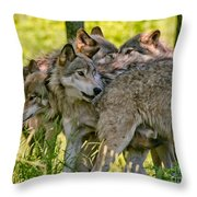 Timber Wolf Pictures 61 Throw Pillow