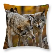 Timber Wolf Pictures 62 Throw Pillow