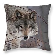 Timber Wolf Pictures 620 Throw Pillow