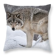 Timber Wolf Pictures 683 Throw Pillow