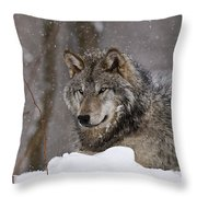 Timber Wolf Pictures 74 Throw Pillow