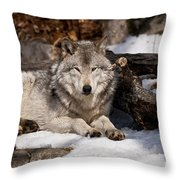 Timber Wolf Pictures 776 Throw Pillow