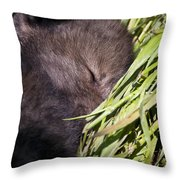 Timber Wolf Pictures 820 Throw Pillow