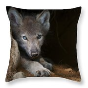 Timber Wolf Pictures 875 Throw Pillow