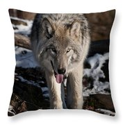 Timber Wolf Pictures 954 Throw Pillow