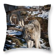 Timber Wolf Pictures 957 Throw Pillow by World Wildlife Photography