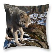 Timber Wolf Pictures 969 Throw Pillow
