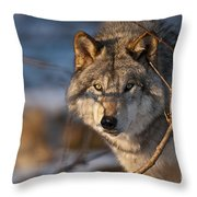 Timber Wolf Pictures 981 Throw Pillow